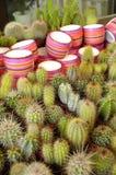 Blühen Sie Kaktus Lizenzfreies Stockbild