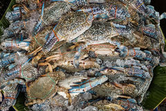 Blühen Sie Krabbe, blaue Krabbe, blaue Schwimmerkrabbe, blaue Mannakrabbe, Sand Lizenzfreie Stockfotos