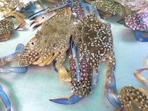 Blühen Sie Krabbe, blaue Krabbe, blaue Schwimmerkrabbe, blaue Mannakrabbe, Sandkrabbe Stockfotografie