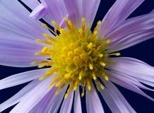 Blühen Sie mit Pistil und den Staubgefässen Stockfoto