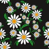 Blühen Sie nahtloses Muster mit Kamille auf einem schwarzen Hintergrund Stockfotografie