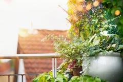 Blühen Sie Pflanzer auf Balkon oder Terrasse im Sonnenunterganglicht Städtische Behälter-Gartenarbeit stockbilder