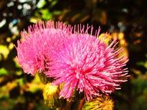 Blühen Sie, rote Blume, wunderbare Blume, wachsende Knospenblumen Lizenzfreie Stockfotos