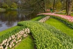 Blühen Sie Streifen von Blumen im Park bei Keukenhof Lizenzfreies Stockfoto