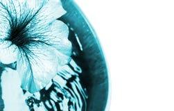 Blühen Sie und eine hölzerne Schüssel blaue Wasser Farbeffekte Stockbild