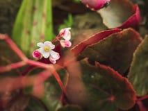 Blühen Sie weiße mini grüne Blattnatur im Wald Stockfoto