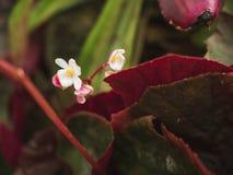 Blühen Sie weiße mini grüne Blattnatur im Wald Stockfotos