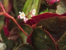 Blühen Sie weiße mini grüne Blattnatur im Wald Lizenzfreie Stockbilder