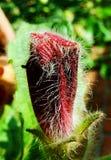Blühen Sie, wilde Blume, wilde shengdi Blumen Stockfotografie