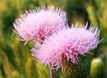 Blühen Sie, wilde Blumen, wachsende Knospenblumen Lizenzfreies Stockbild