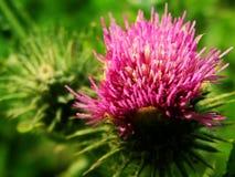 Blühen Sie, wilde Blumen, wachsende Knospenblumen Stockfotografie