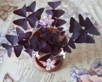 Blühen Sie, zacken Sie, Natur, Blumen, Anlage aus lizenzfreie stockfotografie