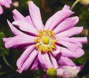 Blühen Sie zur Frühlingszeit im Abschluss herauf Ansicht Stockfotografie