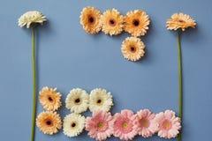 Blühen Sie Zusammensetzung von weißen, rosa und orange Gerberas auf einem Hintergrund des blauen Papiers stockfoto