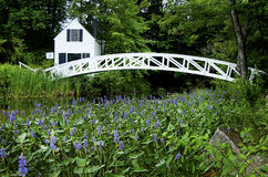 Blühen um Fuß-Brücke im Acadia Stockbild