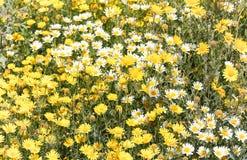 Blühen und bereits geblüht lizenzfreies stockfoto