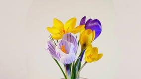 Blühen von Blumen stock video footage