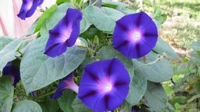 Blühen von Blumenanlagen stockfotografie