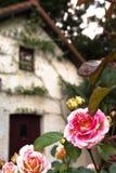 Blühen weiße und rosa Rose mit einem unscharfen Haus im Hintergrund lizenzfreie stockfotografie