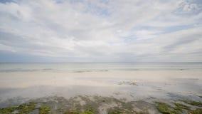 Blühende Algen auf der Küste der Insel von Bohol philippinen Dunkelheit mit Beleuchtung stock video