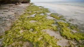 Blühende Algen auf der Küste der Insel von Bohol philippinen Dunkelheit mit Beleuchtung Schießen in der Bewegung stock video footage
