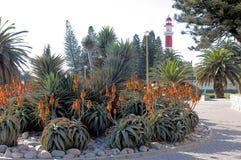 Blühende Aloen und der Leuchtturm in Swakopmund, Namibia Stockbild