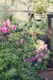 Blühende Azalee Stockfotografie