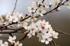 Blühende Bäume Stockfotografie