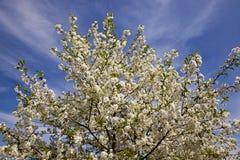Blühende Bäume Lizenzfreie Stockfotos