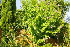 Blühende Bäume Lizenzfreies Stockbild