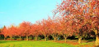 Blühende Bäume Stockbilder
