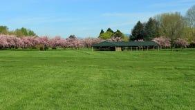 Blühende Bäume Lizenzfreie Stockfotografie
