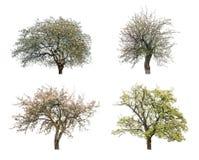 Blühende Bäume stockbild