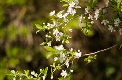 Blühende Bäume lizenzfreies stockfoto
