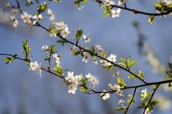 Blühende Bäume stockfoto