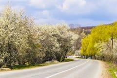 Blühende Bäume entlang der Straße Lizenzfreies Stockbild