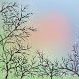 Blühende Bäume und blauer Himmel Stockbilder