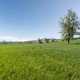 Blühende Bäume und Weiden Stockfoto