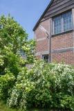 Blühende Büsche an der Ecke von Tudor Revival reden Gebäude an stockbilder