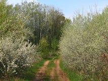 Blühende Büsche des Frühlinges im Wald Stockbild