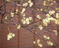 Blühende Baumaste mit den neuen Knospen neu im Frühjahr Stockfotografie
