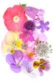 Blühende Blüten Stockbild