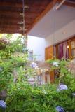 Blühende Bleiwurz wächst vor dem Sommerhaus Lizenzfreies Stockfoto