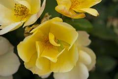 Blühende Blume lizenzfreies stockbild