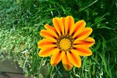 Blühende Blume in der Sonne stockfotografie