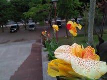 Blühende Blume, die die Kamera morgens schaut stockfoto