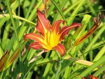 Blühende Blume und Gras Stockbild
