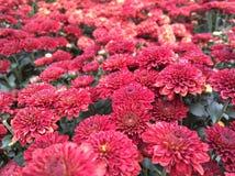 Blühende Blumen Stockbilder