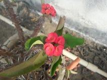 Blühende Blumen lizenzfreies stockbild