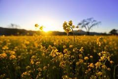 Blühende Blumen Lizenzfreies Stockfoto